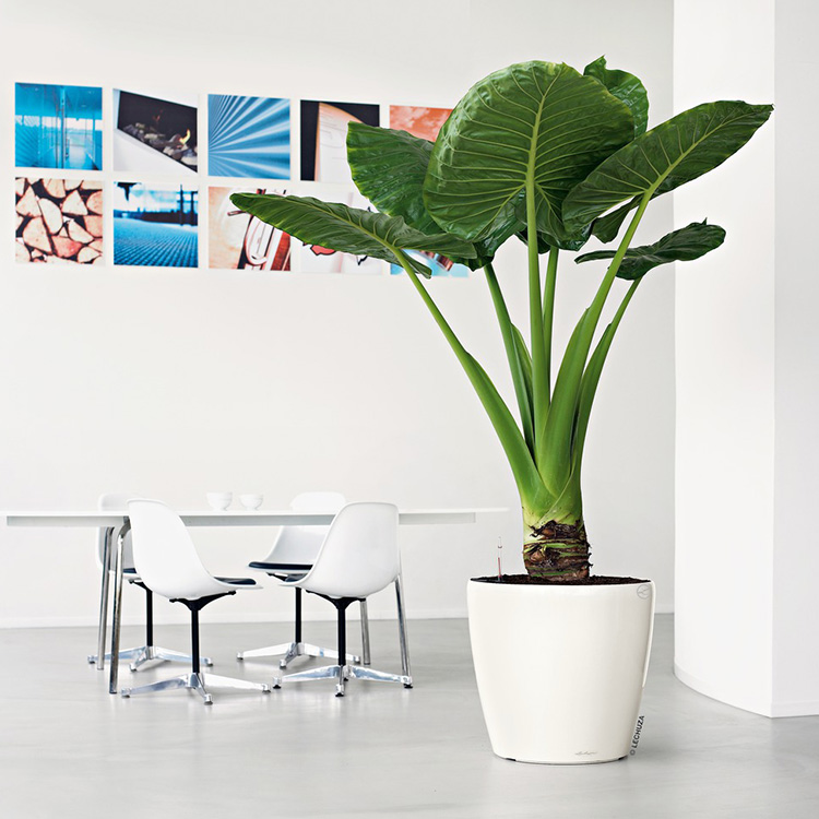 Classico 60 And 70 Self Watering Planters Lechuza